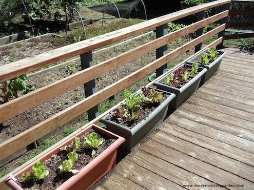 Bob Vila Plants 1