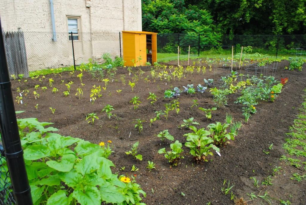 Dig Into Community Gardening @ Loveland | Longmont | Fort Collins CO ...