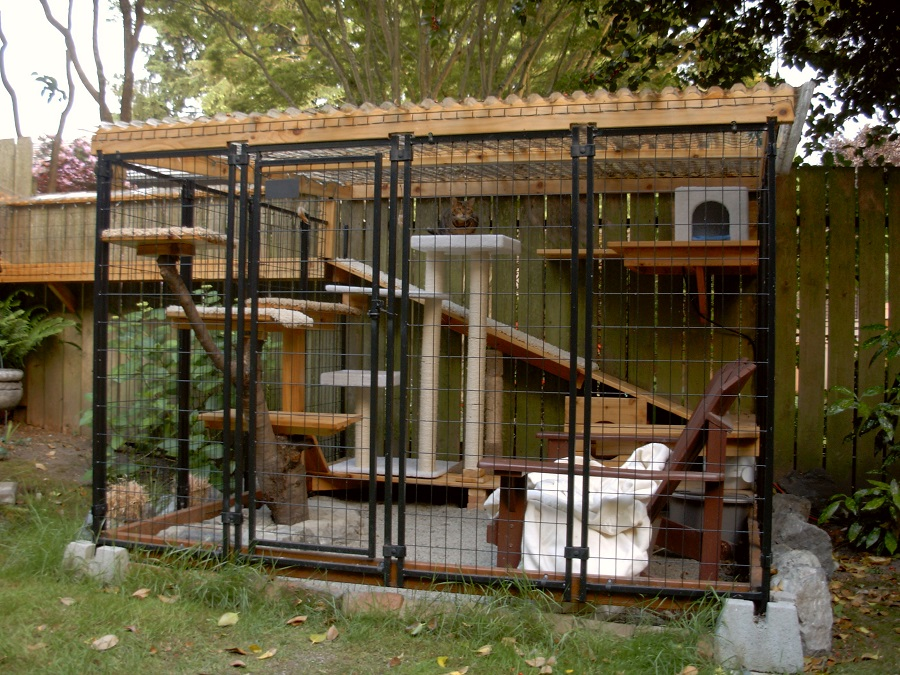 Its A Catio Daddio Safe Outdoor Access For Frisky
