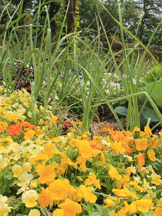 choosing annuals small