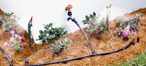 Installing A Drip Irrigation System In Your Garden
