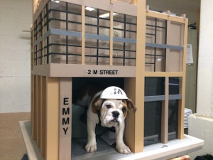 apartment pup