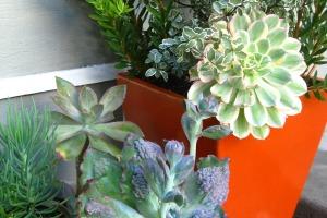 gardening - digs