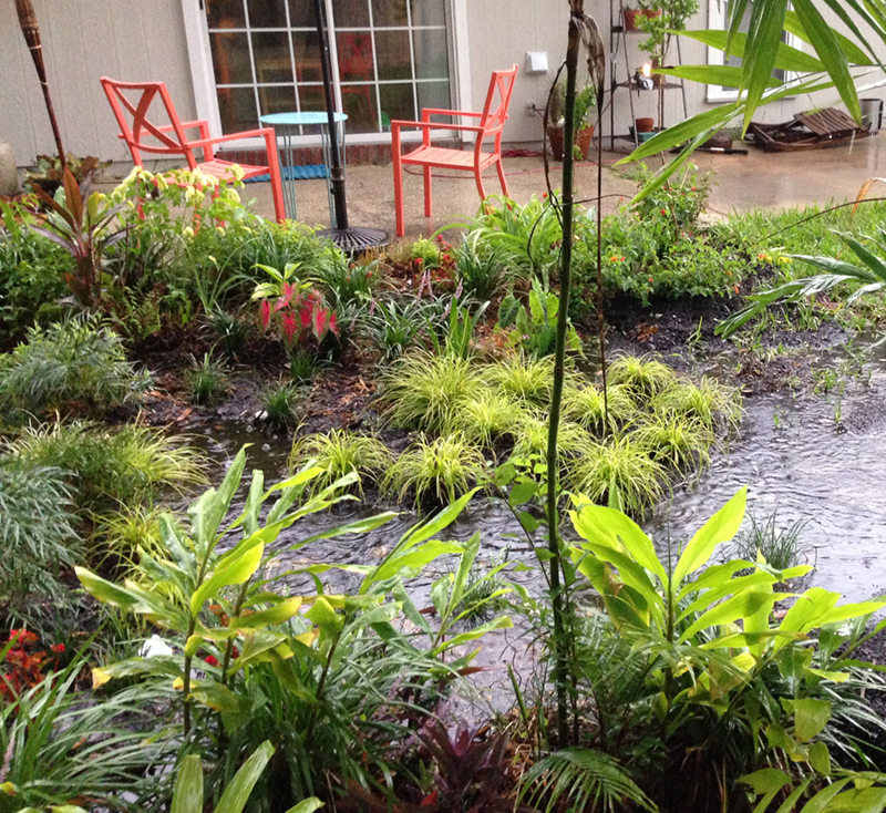rain garden 444e28 - Smart Watering Tips for Every Gardener