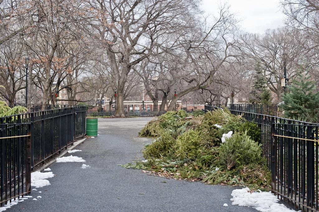 Nyc Christmas Tree Disposal
